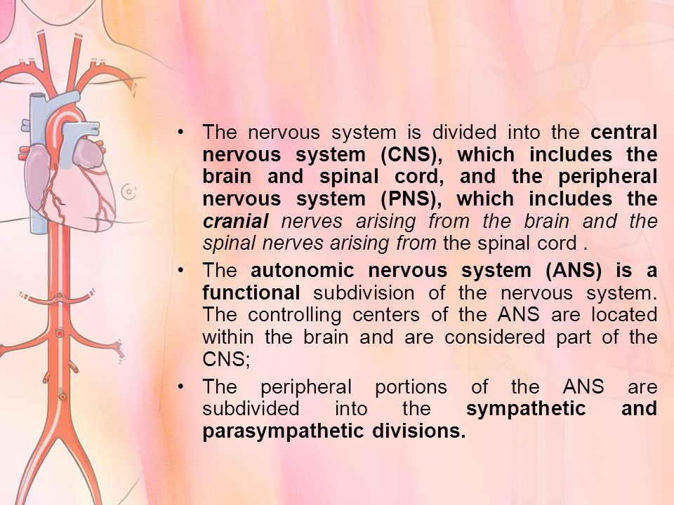 The nervous system is divided into the central nervous system (CNS), which includes the brain and spinal cord, and the peripheral nervous system (PNS), which includes the cranial nerves arising from the brain and the spinal nerves arising from the spinal cord.