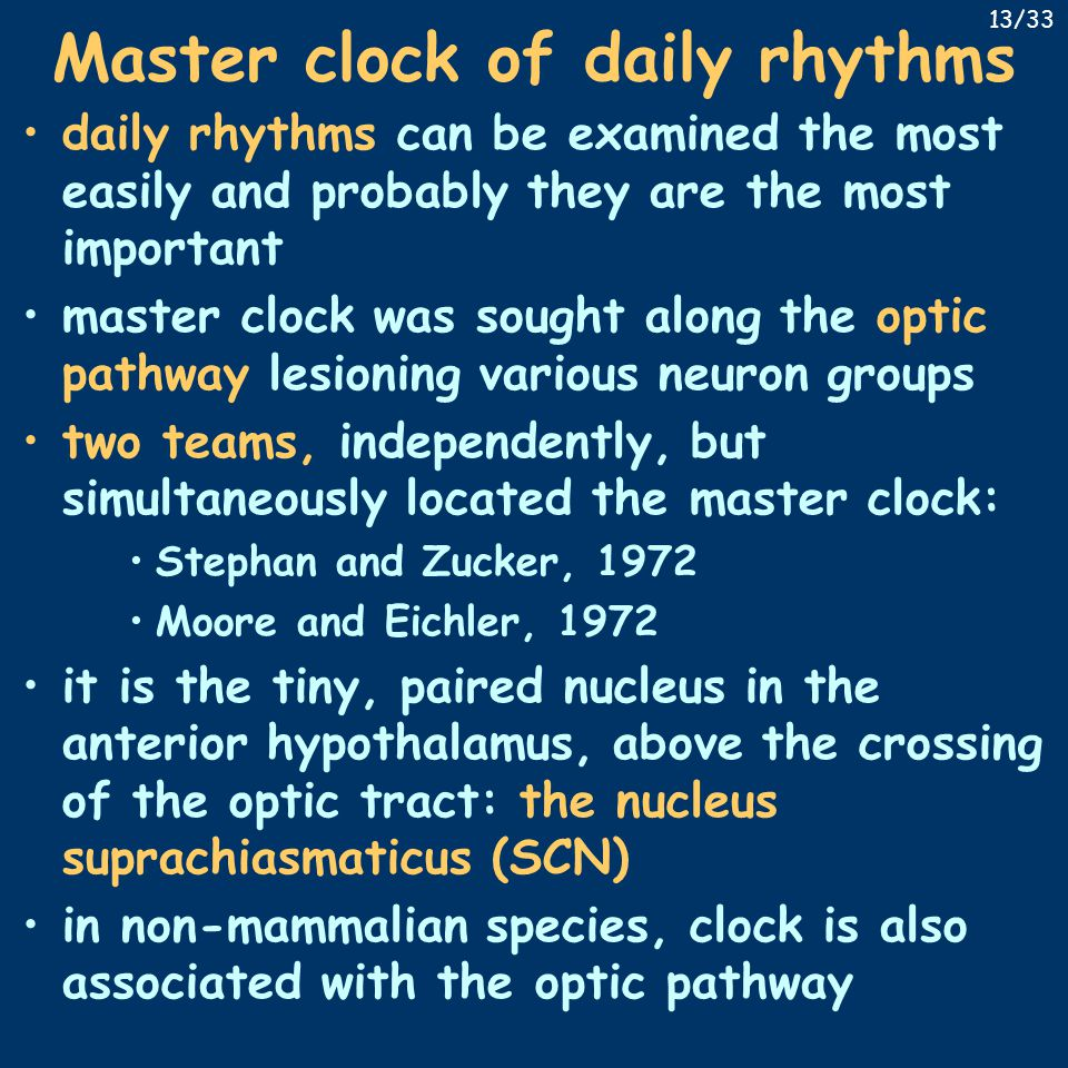 Master clock of daily rhythms daily rhythms can be examined the most easily and probably they are the most important master clock was sought along the