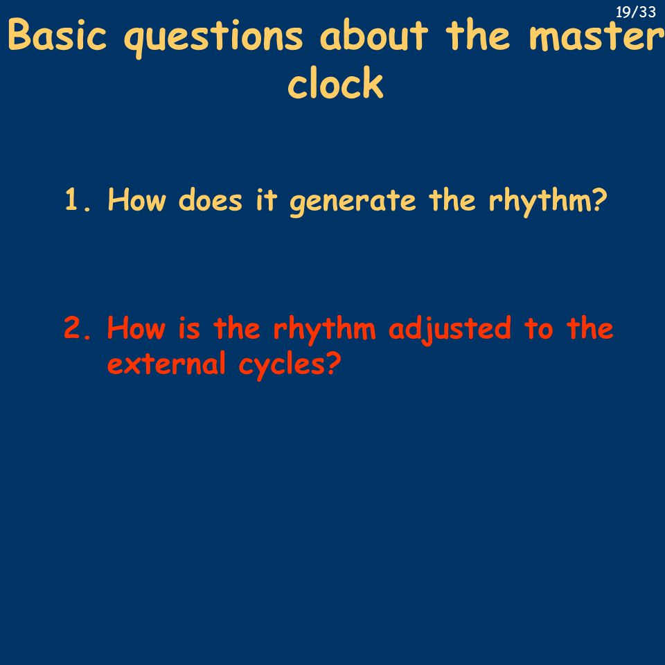 Basic questions about the master clock 1.How does it generate the rhythm? 2. How is the rhythm adjusted to the external cycles? 19/33