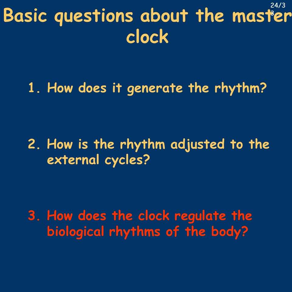 Basic questions about the master clock 1.How does it generate the rhythm? 2. How is the rhythm adjusted to the external cycles? 3. How does the clock