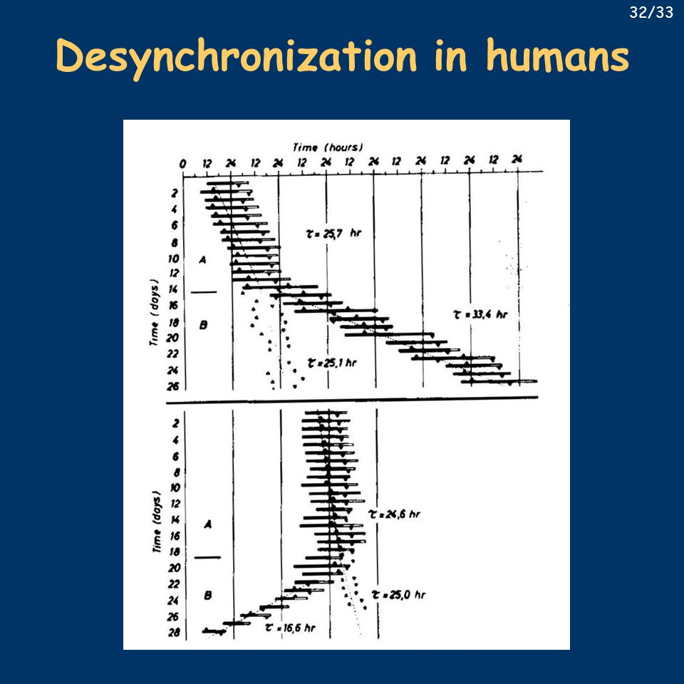 Desynchronization in humans 32/33