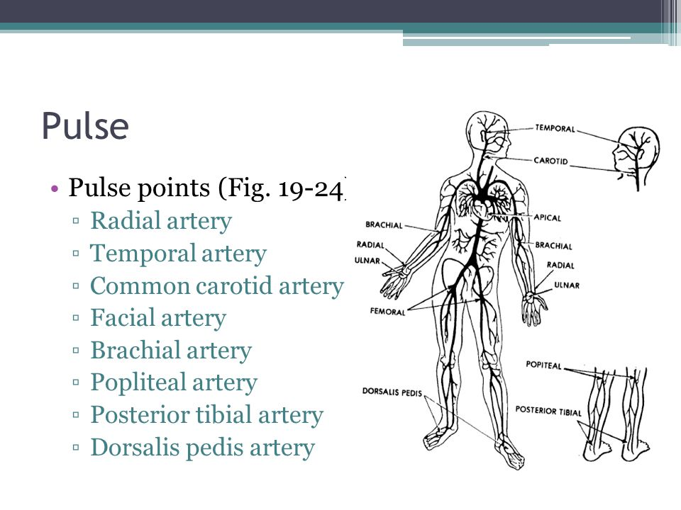 Pulse Pulse points (Fig.