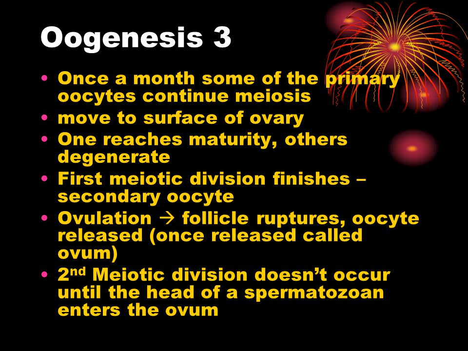 Oogenesis 3 Once a month some of the primary oocytes continue meiosis move to surface of ovary One reaches maturity, others degenerate First meiotic d
