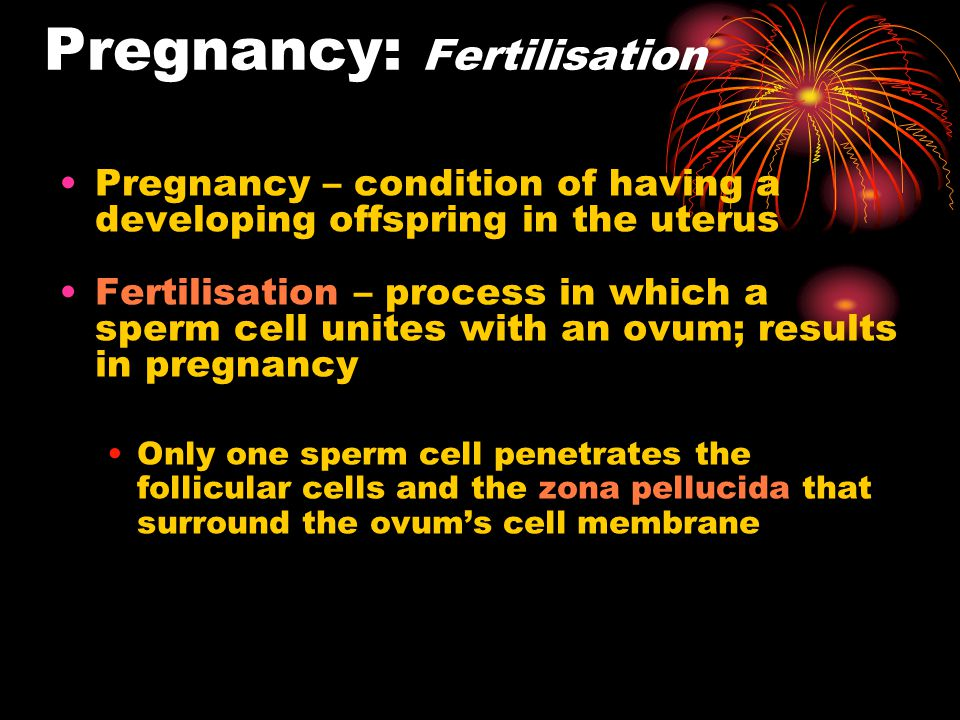 Pregnancy: Fertilisation Pregnancy – condition of having a developing offspring in the uterus Fertilisation – process in which a sperm cell unites wit