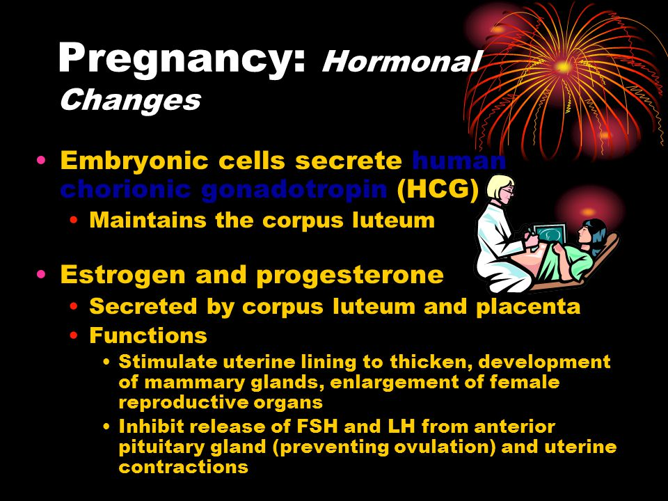 Pregnancy: Hormonal Changes Embryonic cells secrete human chorionic gonadotropin (HCG) Maintains the corpus luteum Estrogen and progesterone Secreted