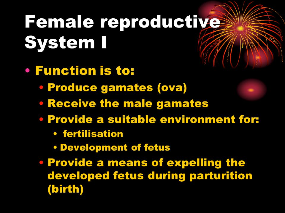 Female reproductive System I Function is to: Produce gamates (ova) Receive the male gamates Provide a suitable environment for: fertilisation Developm
