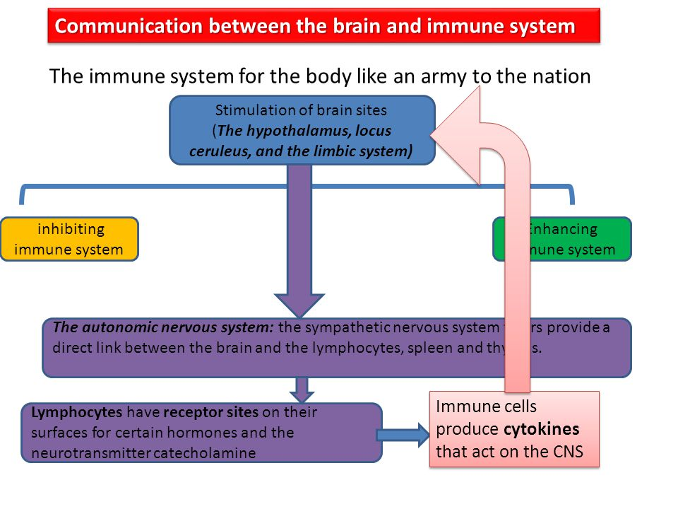 Communication between the brain and immune system The immune system for the body like an army to the nation Stimulation of brain sites (The hypothalam
