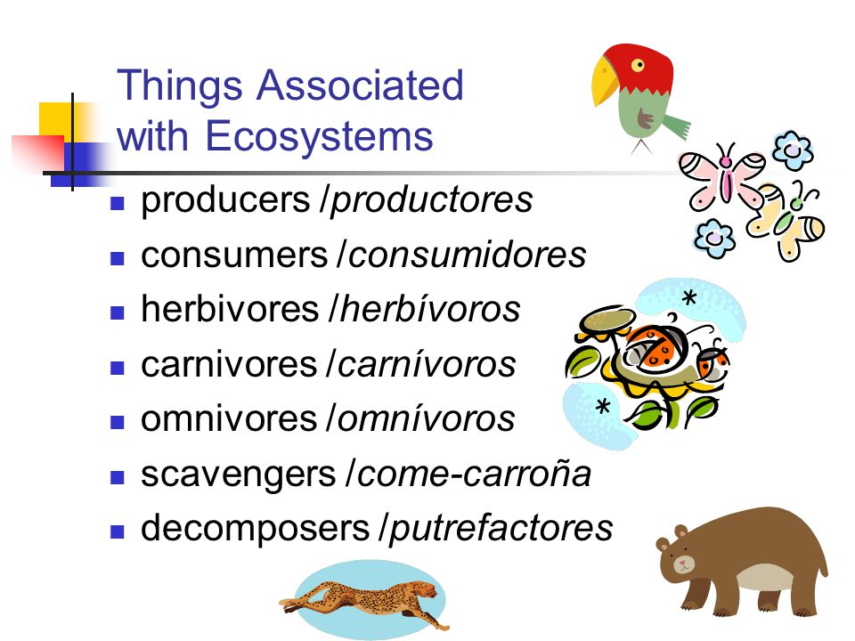 Things Associated with Ecosystems producers /productores consumers /consumidores herbivores /herbívoros carnivores /carnívoros omnivores /omnívoros scavengers /come-carroña decomposers /putrefactores