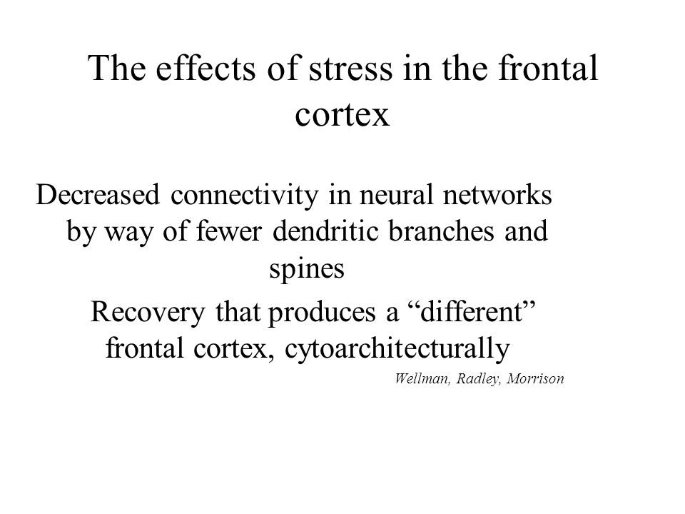 The effects of stress in the frontal cortex Decreased connectivity in neural networks by way of fewer dendritic branches and spines Recovery that produces a different frontal cortex, cytoarchitecturally Wellman, Radley, Morrison