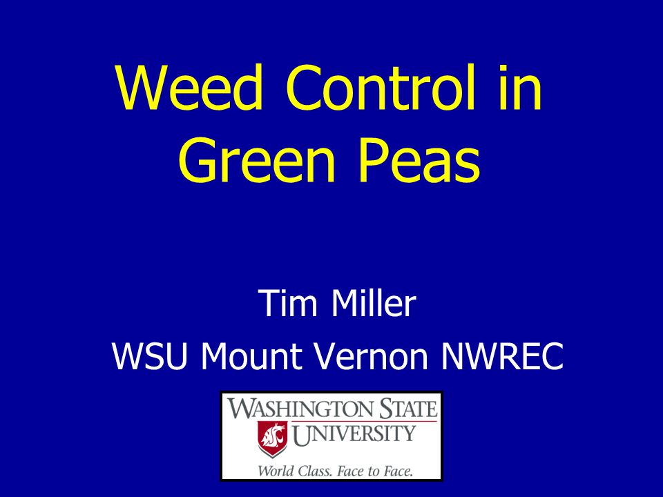 Weed Control in Green Peas Tim Miller WSU Mount Vernon NWREC