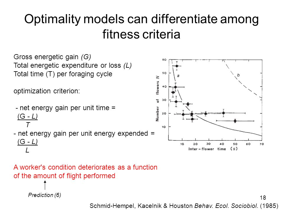 18 Optimality models can differentiate among fitness criteria Gross energetic gain (G) Total energetic expenditure or loss (L) Total time (T) per foraging cycle optimization criterion: - net energy gain per unit time = (G - L) T - net energy gain per unit energy expended = (G - L) L A worker s condition deteriorates as a function of the amount of flight performed Prediction (6) Schmid-Hempel, Kacelnik & Houston Behav.