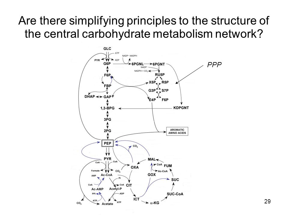 29 Are there simplifying principles to the structure of the central carbohydrate metabolism network? PPP