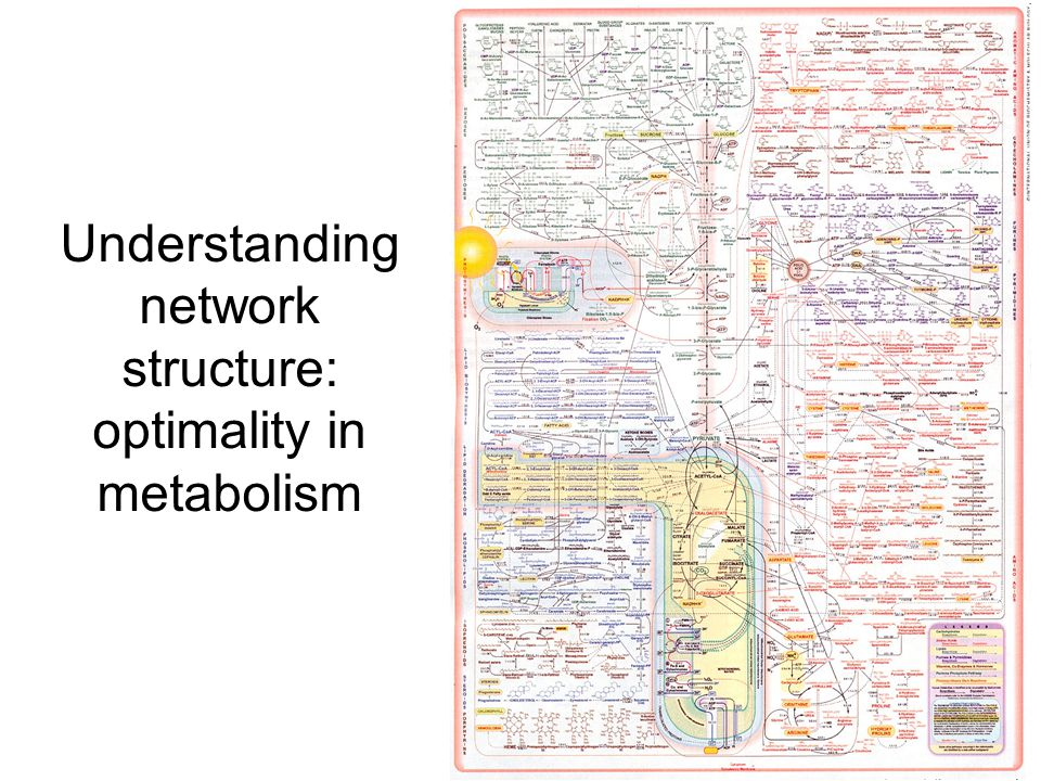 63 Understanding network structure: optimality in metabolism