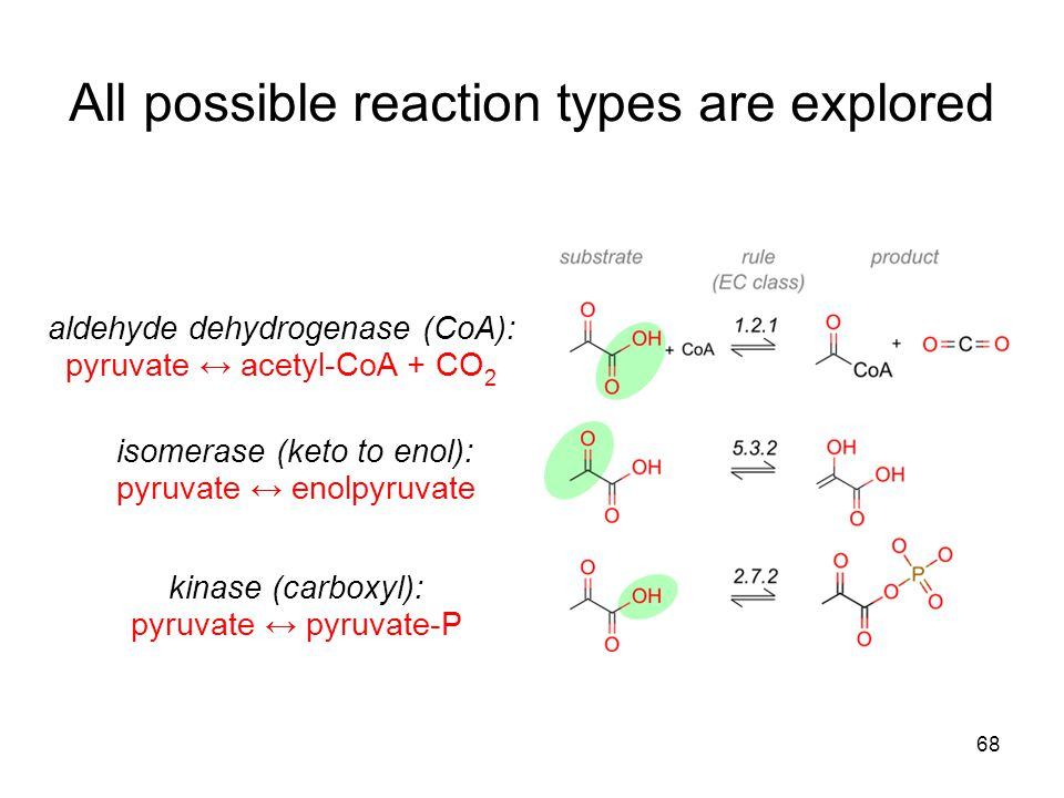68 All possible reaction types are explored aldehyde dehydrogenase (CoA): pyruvate ↔ acetyl-CoA + CO 2 isomerase (keto to enol): pyruvate ↔ enolpyruvate kinase (carboxyl): pyruvate ↔ pyruvate-P