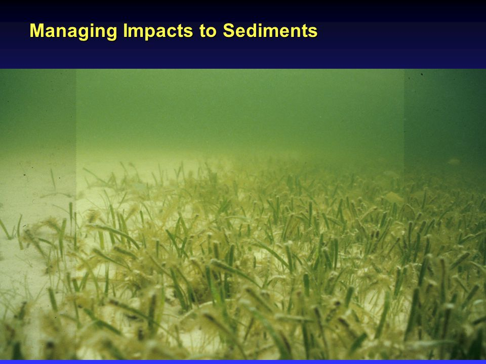 Managing Impacts to Sediments