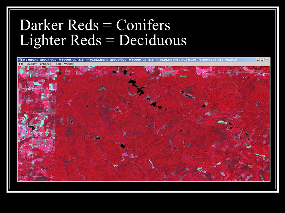 Darker Reds = Conifers Lighter Reds = Deciduous