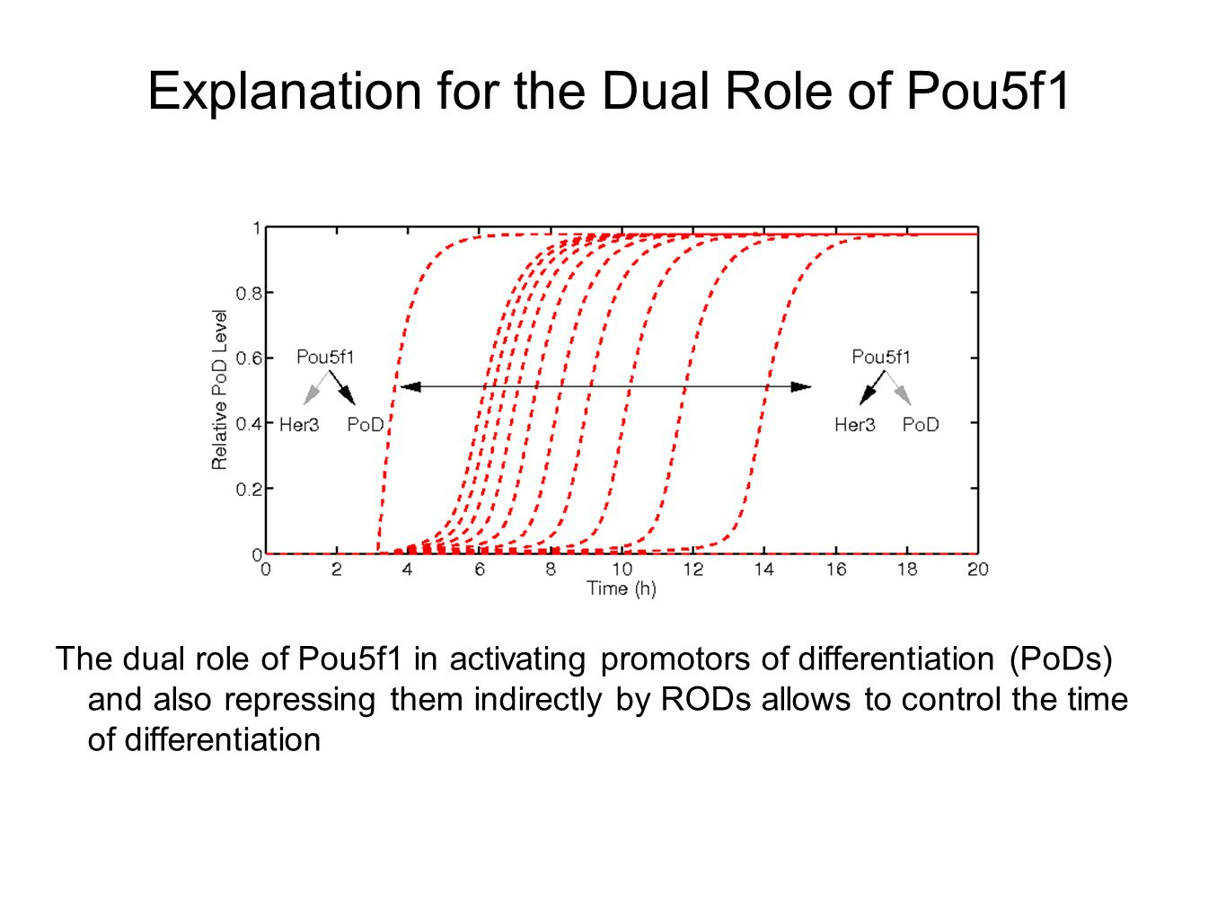Explanation for the Dual Role of Pou5f1 The dual role of Pou5f1 in activating promotors of differentiation (PoDs) and also repressing them indirectly by RODs allows to control the time of differentiation