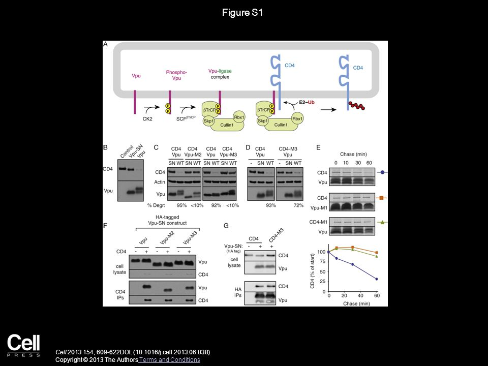 Figure S1 Cell 2013 154, 609-622DOI: (10.1016/j.cell.2013.06.038) Copyright © 2013 The Authors Terms and Conditions Terms and Conditions