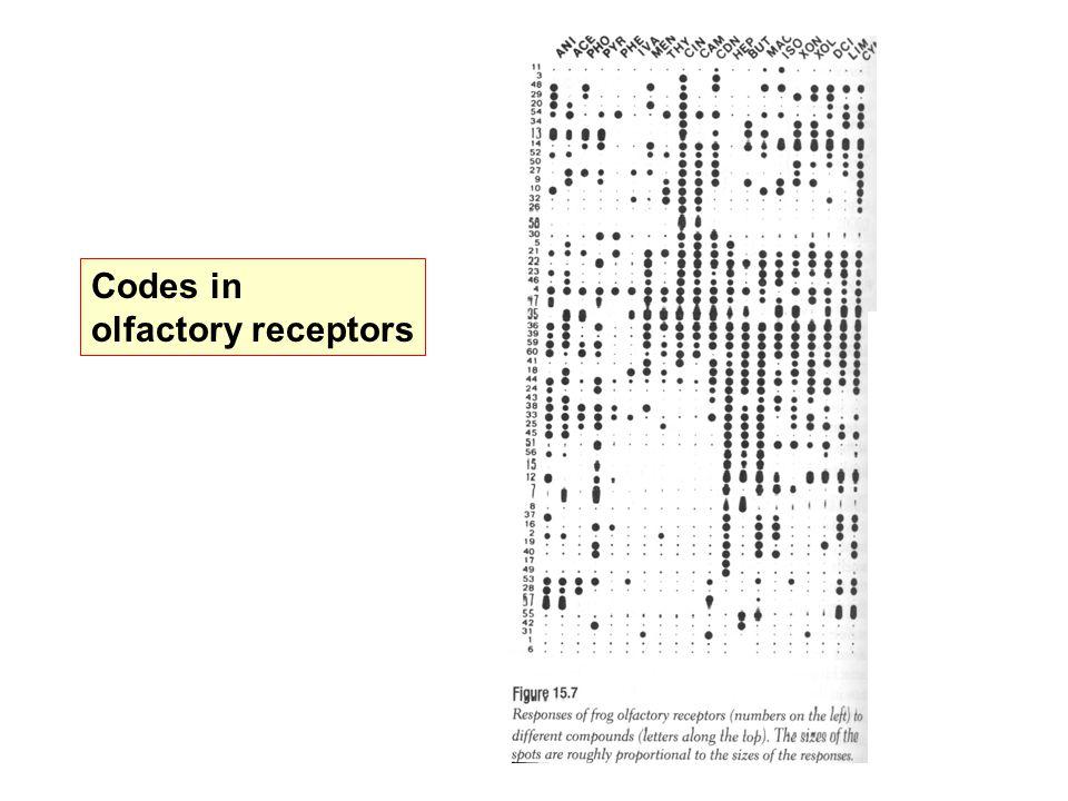 Codes in olfactory receptors