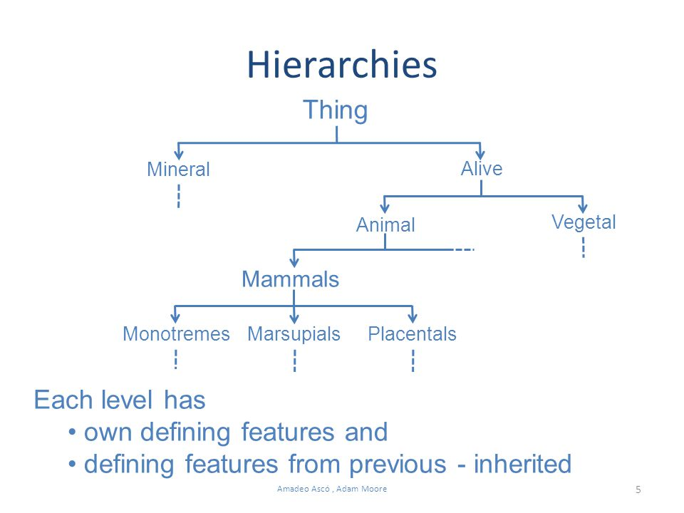 5 Amadeo Ascó, Adam Moore Hierarchies Thing Mineral Alive Animal Vegetal Mammals MonotremesMarsupialsPlacentals Each level has own defining features and defining features from previous - inherited