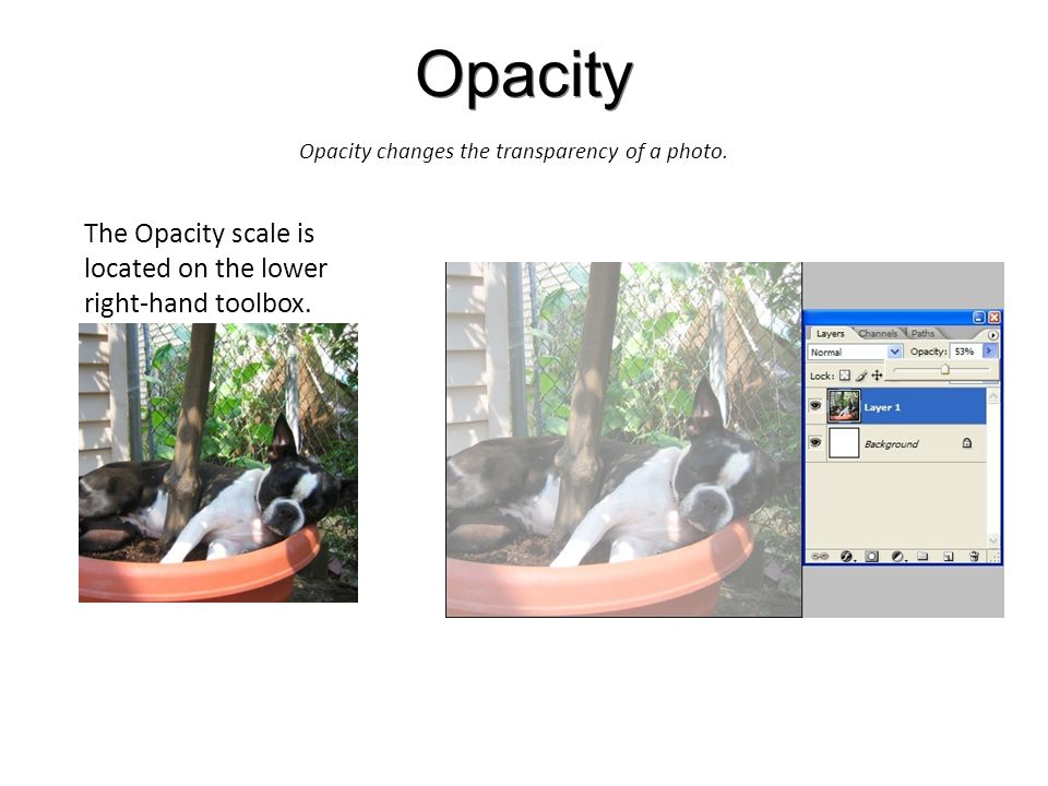 Opacity Opacity changes the transparency of a photo.