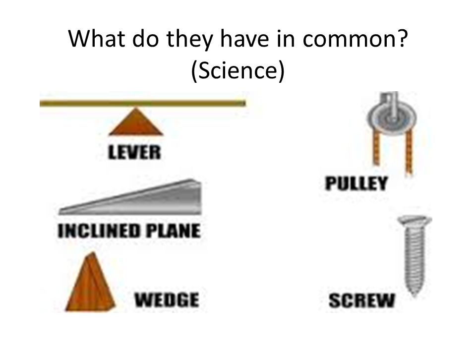 What do they have in common? (Science)