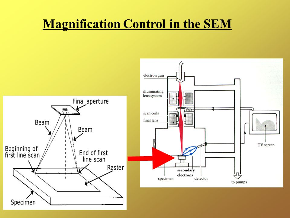 Magnification Control in the SEM