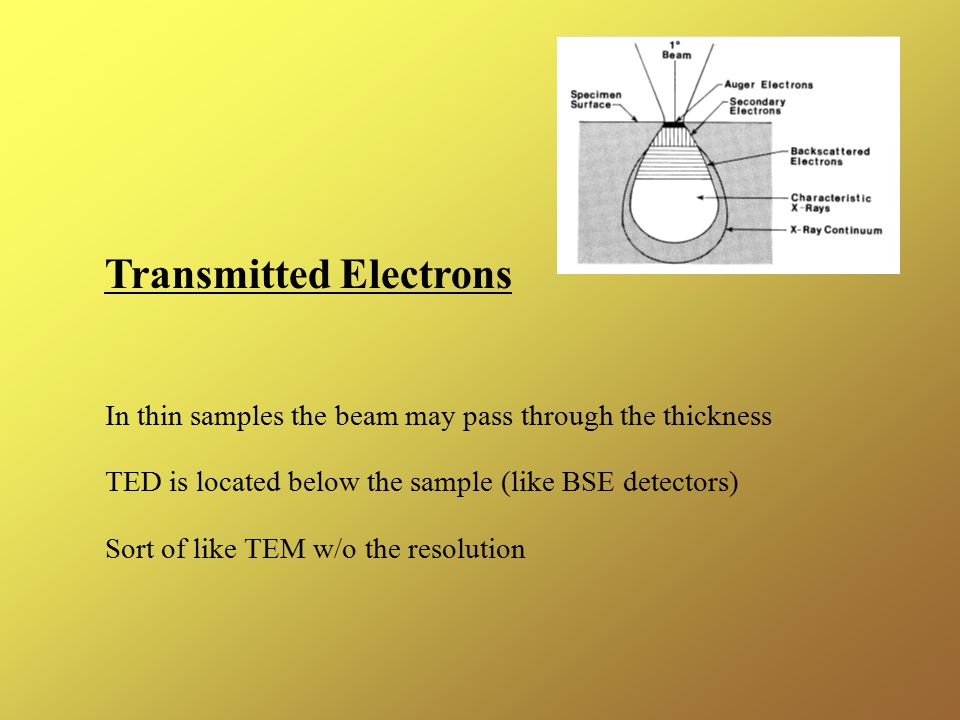 Transmitted Electrons In thin samples the beam may pass through the thickness TED is located below the sample (like BSE detectors) Sort of like TEM w/o the resolution