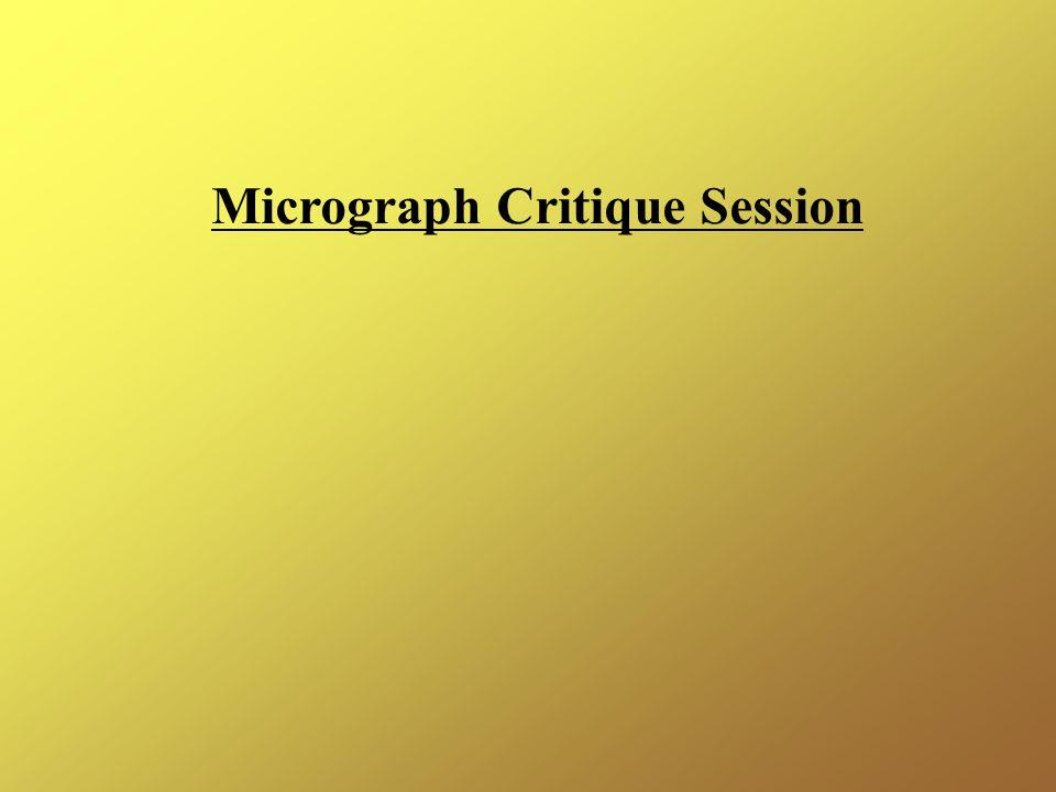 Micrograph Critique Session