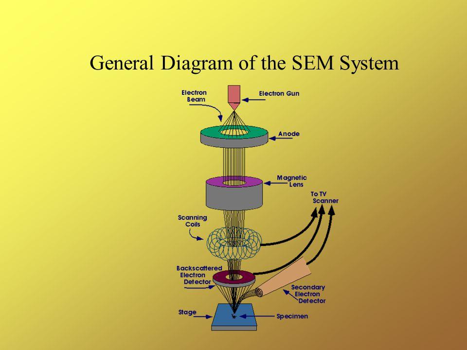 General Diagram of the SEM System