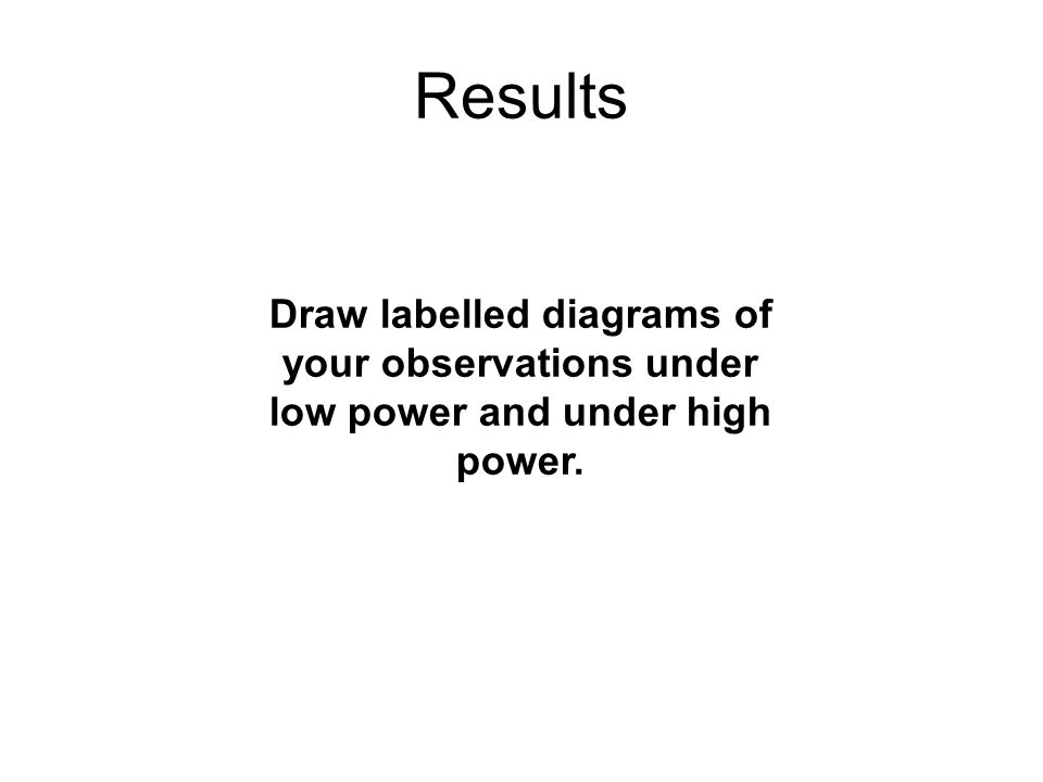 Results Draw labelled diagrams of your observations under low power and under high power.