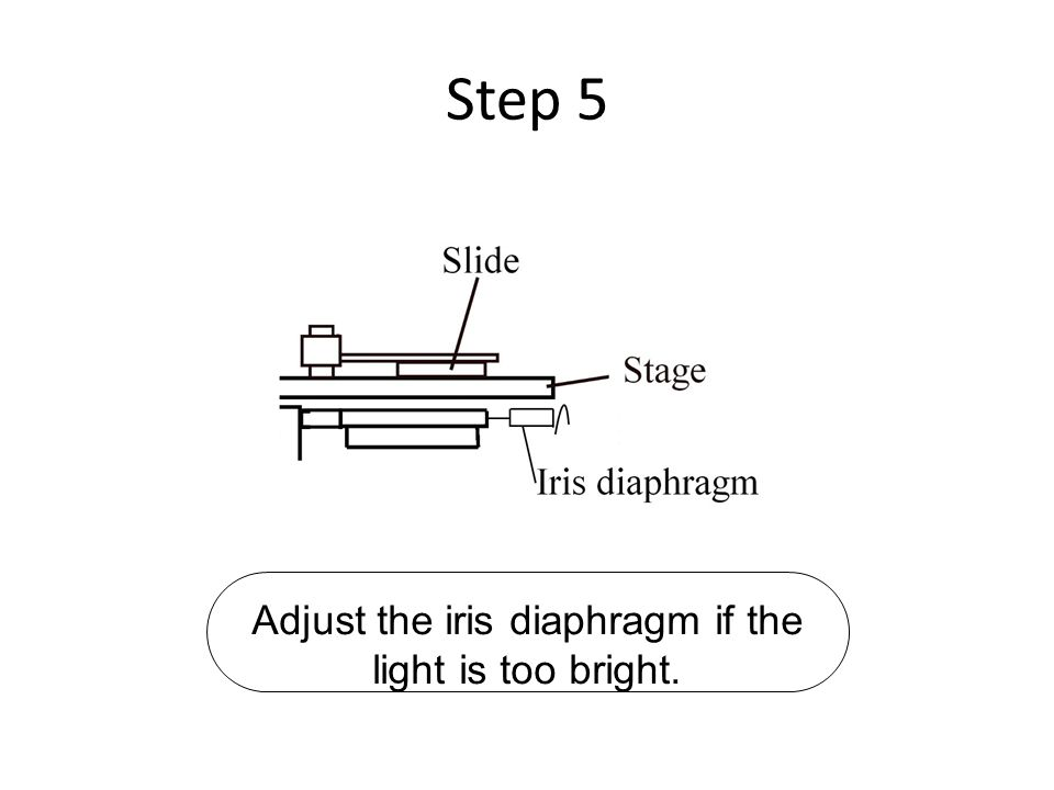 Step 5 Adjust the iris diaphragm if the light is too bright.