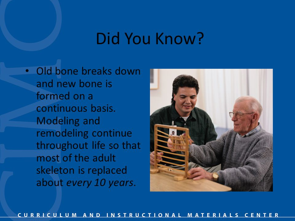 Did You Know. Old bone breaks down and new bone is formed on a continuous basis.