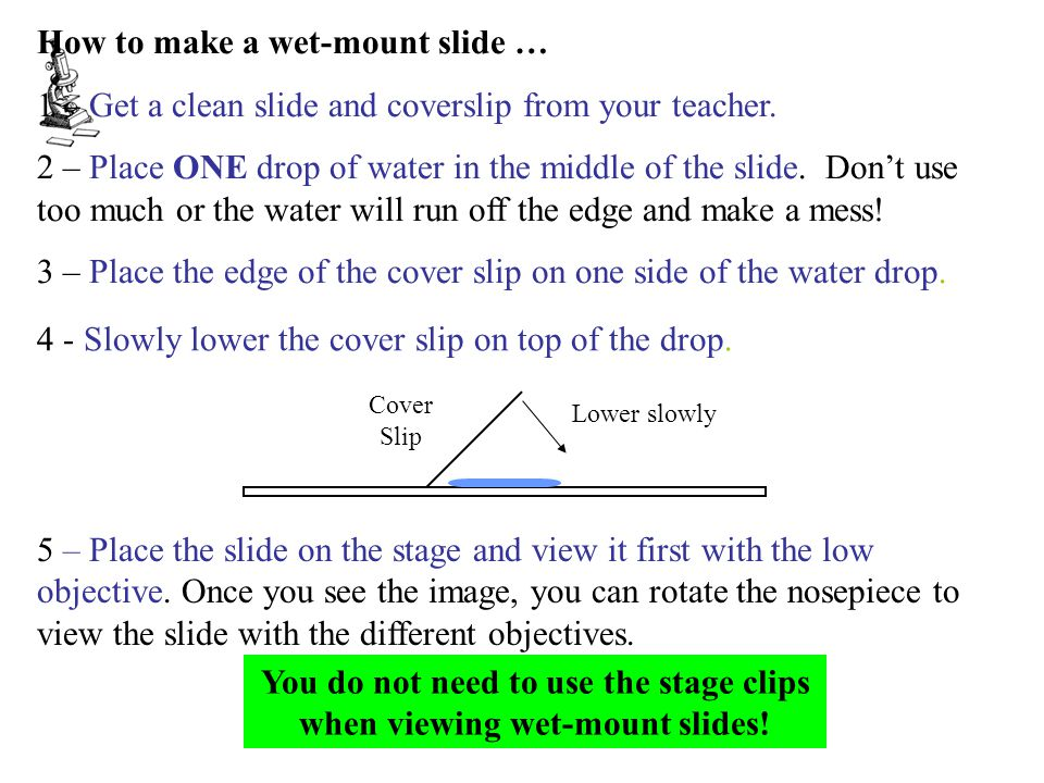 How to make a wet-mount slide … 1 – Get a clean slide and coverslip from your teacher.