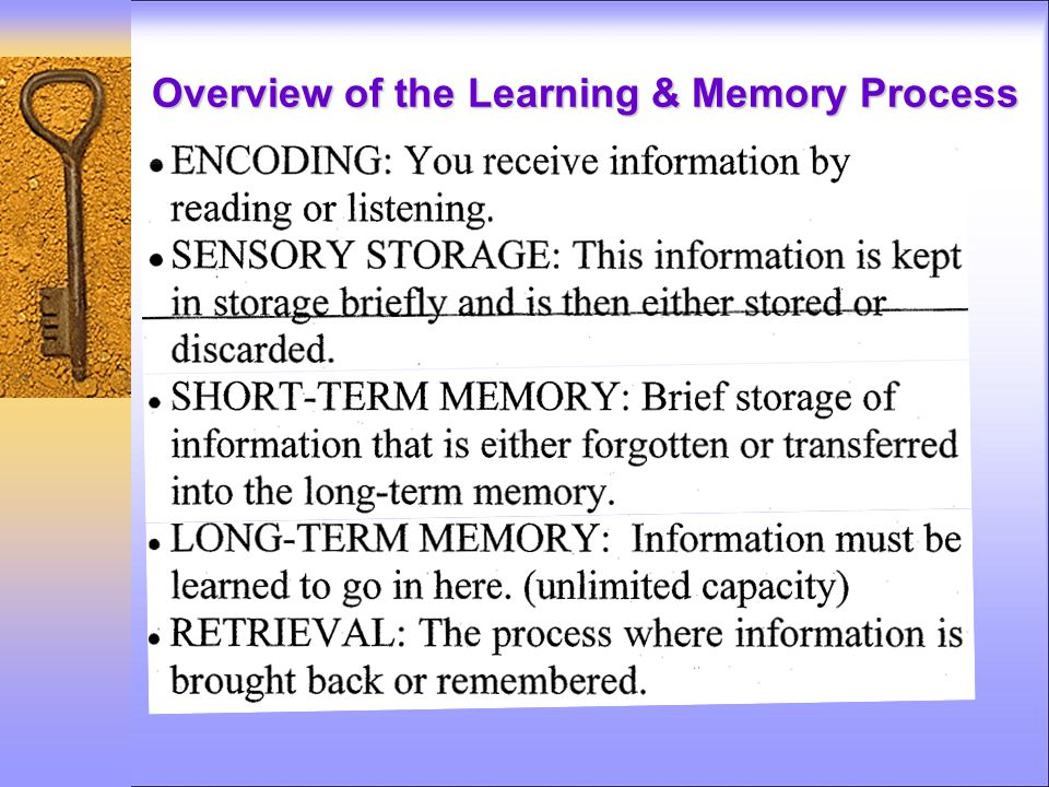 Overview of the Learning & Memory Process