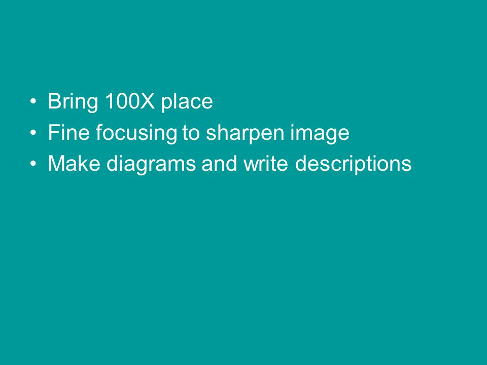 Bring 100X place Fine focusing to sharpen image Make diagrams and write descriptions