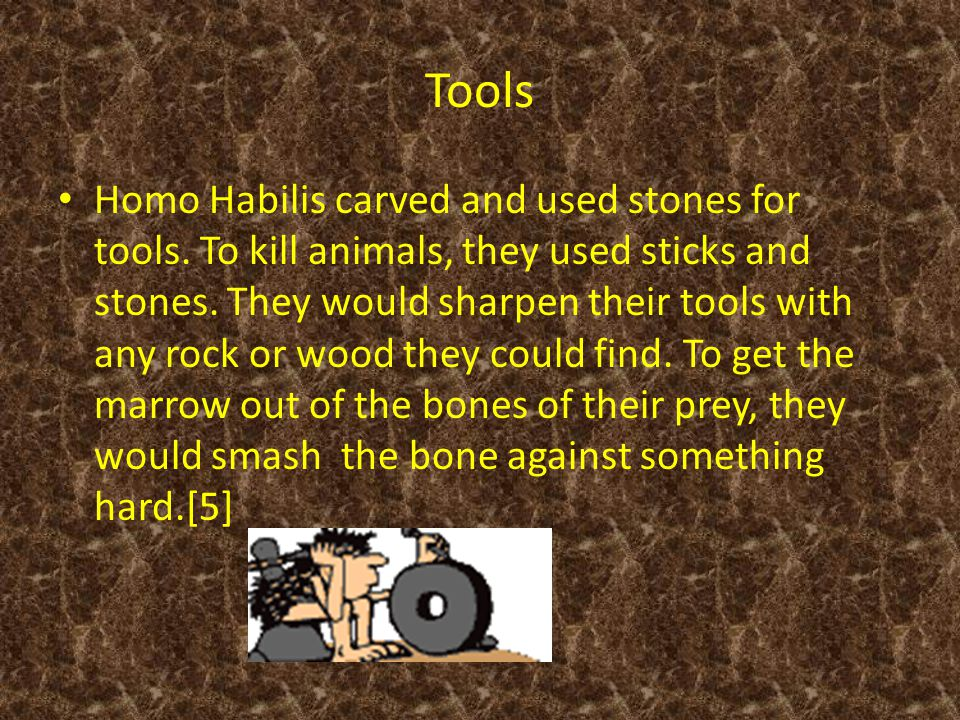Tools Homo Habilis carved and used stones for tools.