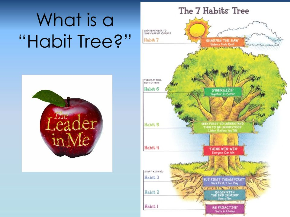 Leadership in Special Education Students use the language of the 7 Habits when solving problems with friends.