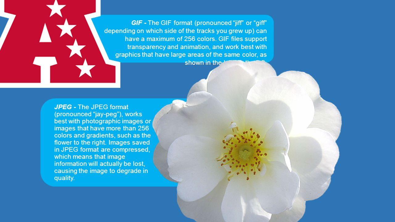 JPEG - The JPEG format (pronounced jay-peg ), works best with photographic images or images that have more than 256 colors and gradients, such as the flower to the right.