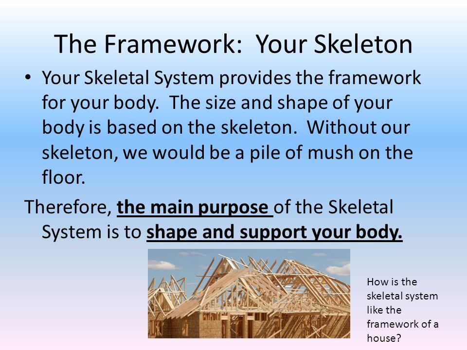 The Framework: Your Skeleton Your Skeletal System provides the framework for your body.