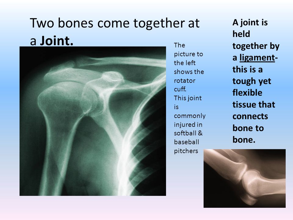 Two bones come together at a Joint. The picture to the left shows the rotator cuff.
