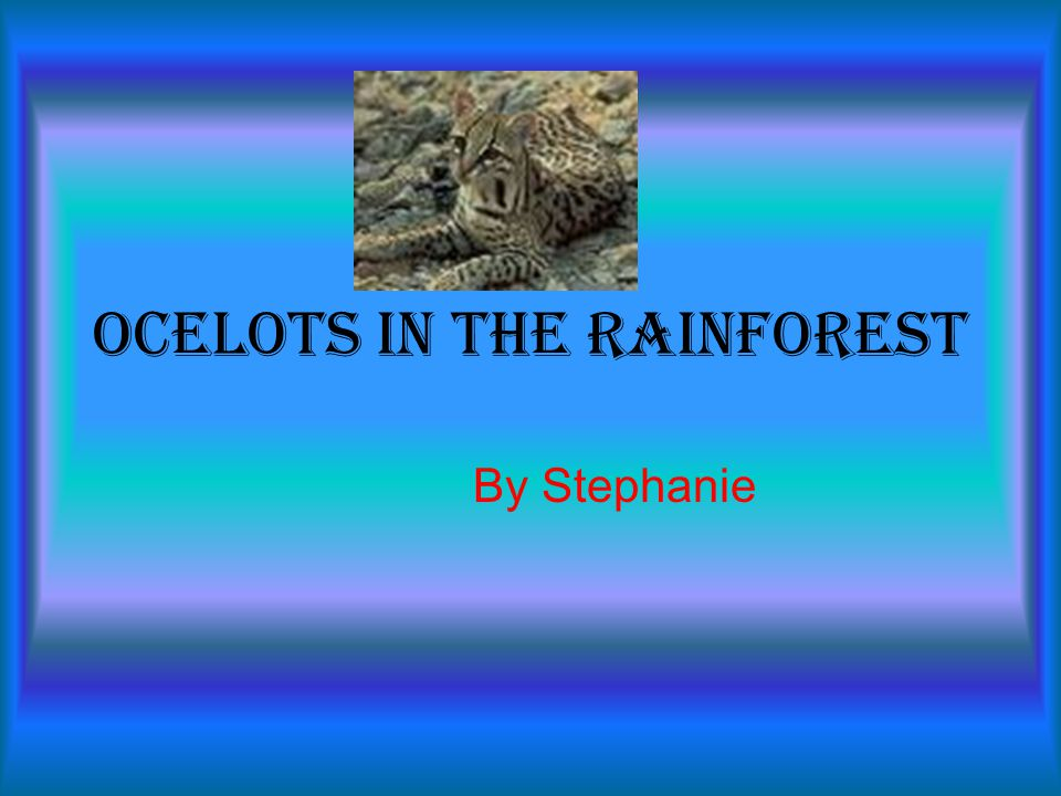 Ocelots in the Rainforest By Stephanie
