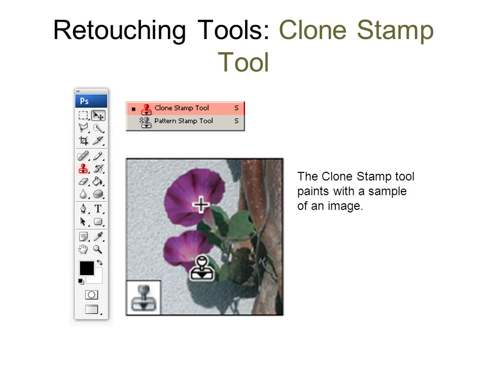 Retouching Tools: Clone Stamp Tool The Clone Stamp tool paints with a sample of an image.