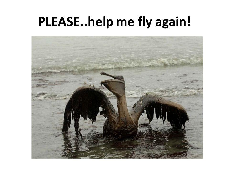PLEASE..help me fly again!