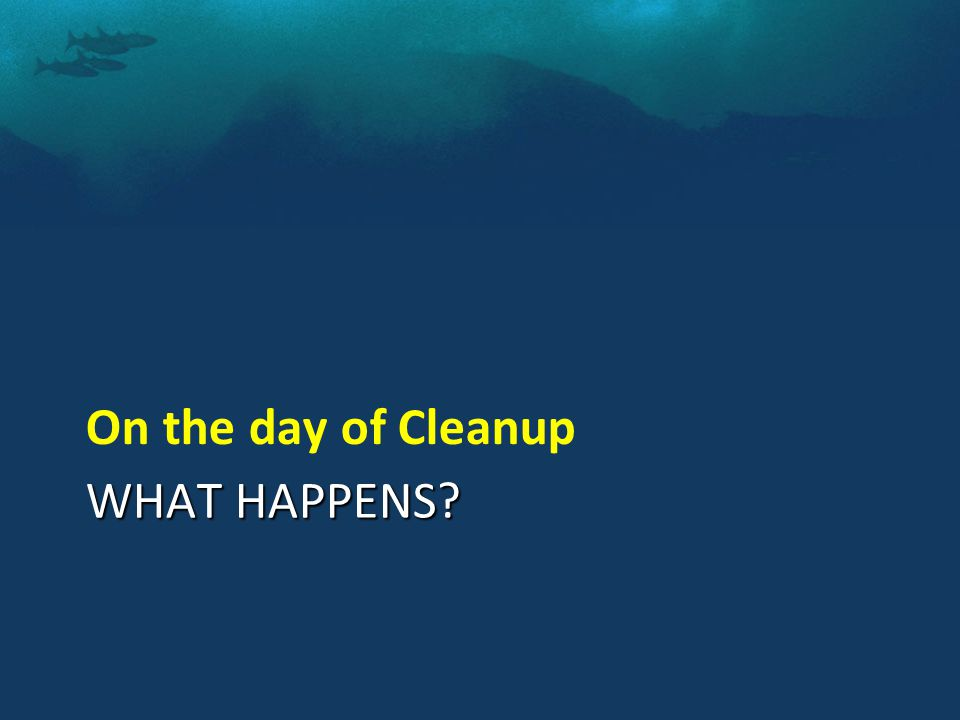 WHAT HAPPENS On the day of Cleanup