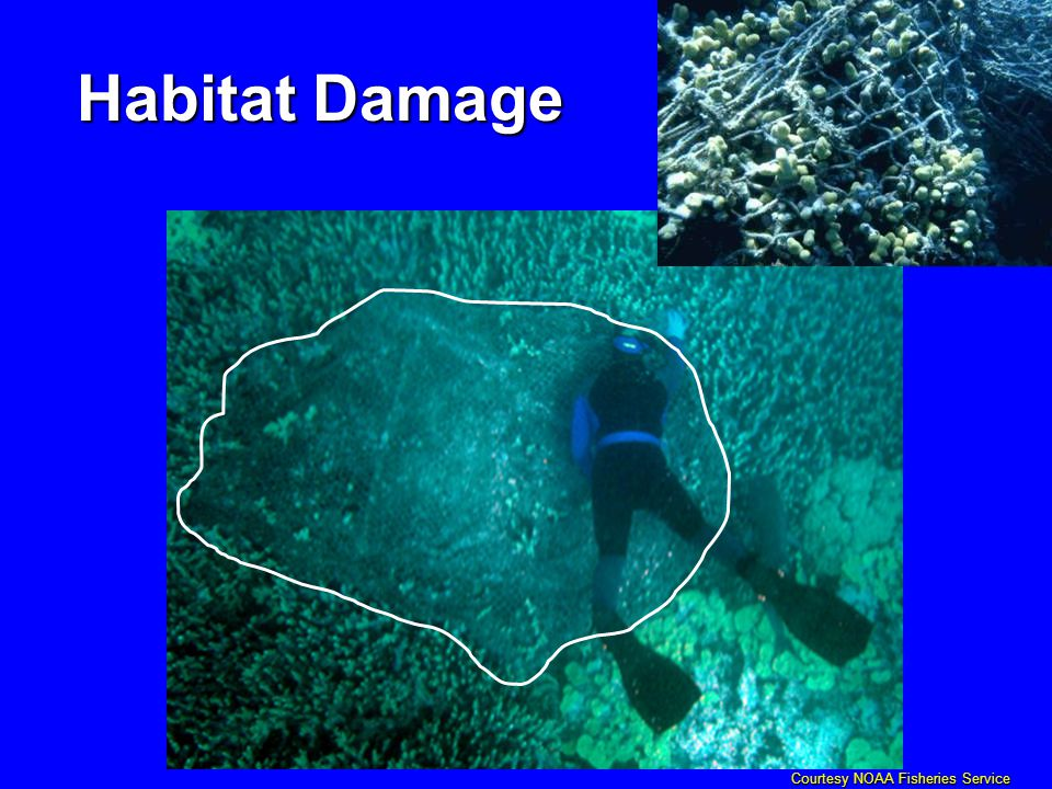 Courtesy NOAA Fisheries Service Habitat Damage