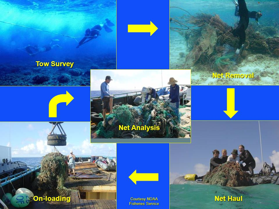 Tow Survey Net Removal Net Haul On-loading Net Analysis Courtesy NOAA Fisheries Service