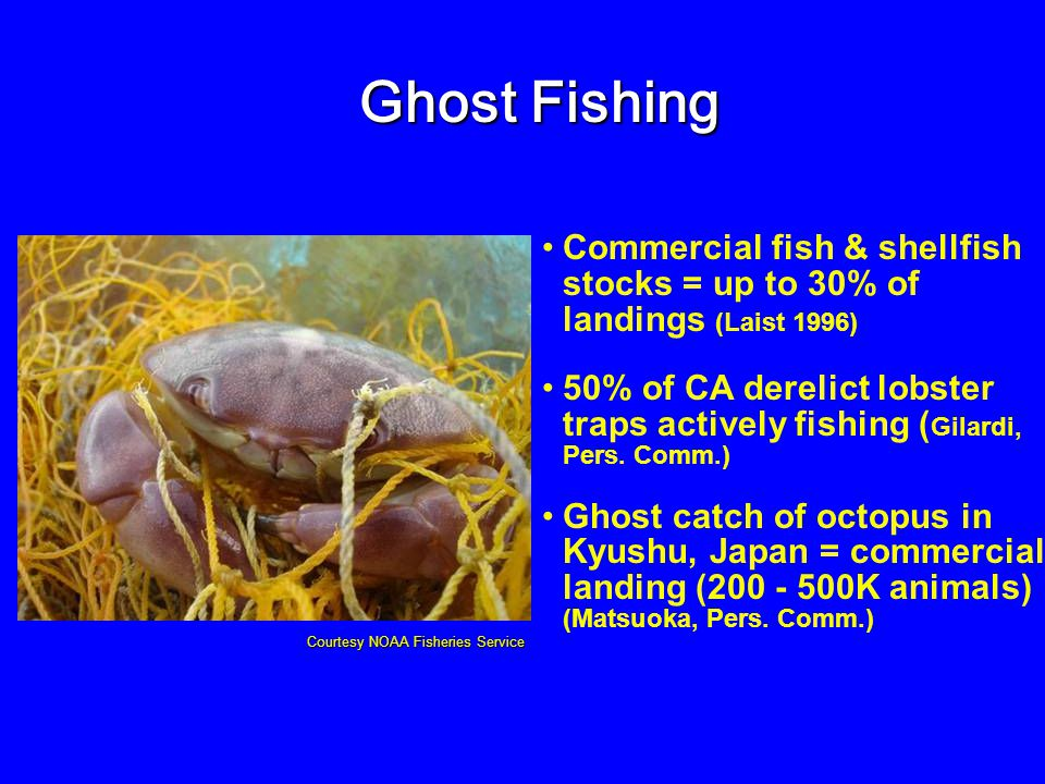 Commercial fish & shellfish stocks = up to 30% of landings (Laist 1996) 50% of CA derelict lobster traps actively fishing ( Gilardi, Pers. Comm.) Ghos
