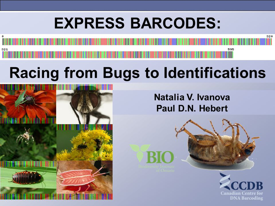 Natalia V. Ivanova Paul D.N. Hebert EXPRESS BARCODES: Racing from Bugs to Identifications