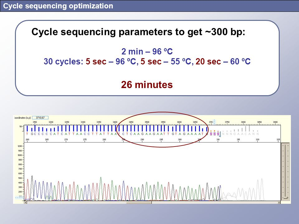 Cycle sequencing optimization Cycle sequencing parameters to get ~300 bp: 2 min – 96 ºC 30 cycles: 5 sec – 96 ºC, 5 sec – 55 ºC, 20 sec – 60 ºC 26 min